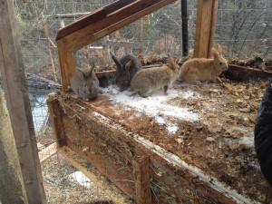 Remulching the Rabbit Cage