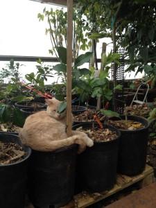 Citrus Cat in Phoenix